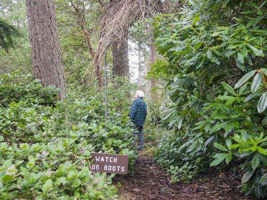 Trail View - Picture of Meerkerk Rhododendron Gardens, Greenbank ...