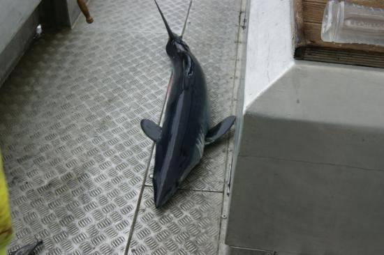 Kaikoura Fishing Charters: First caught