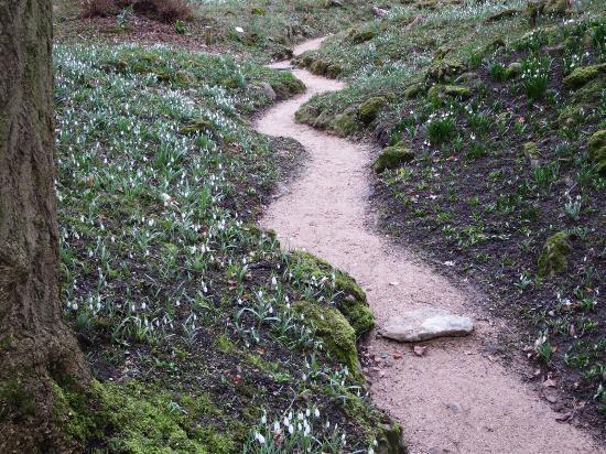 Myddelton House Gardens: Snowdrop rockery.
