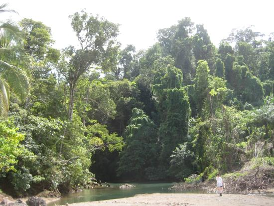 Rio Claro Day Tours : The mouth of the river