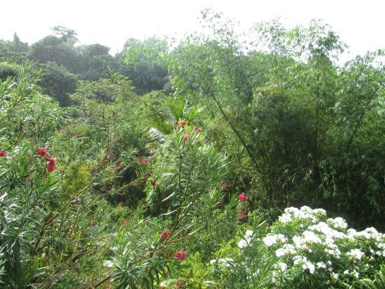 Mango Bay Cottages: Tropical lushness