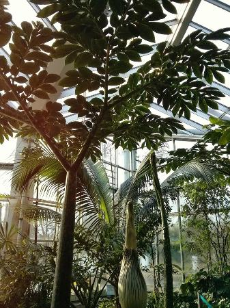 jardins picture of palmengarten frankfurt tripadvisor. Black Bedroom Furniture Sets. Home Design Ideas