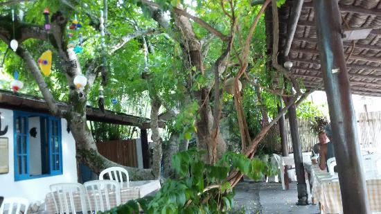 Tia Palmira: Área
