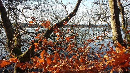 Lake of Menteith: Autumn