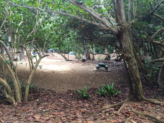 Campsites picture of malaekahana beach campground laie for Oahu camping cabins