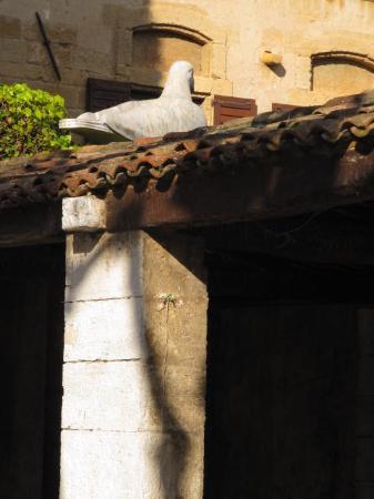 La Colombe d'Or : la grande colomba dell'hotel