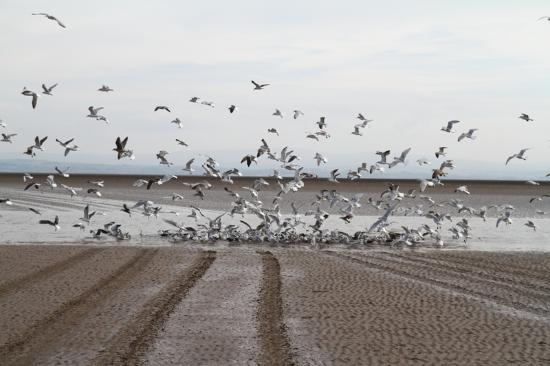 Lancaster Maritime Museum: Tracks and gulls