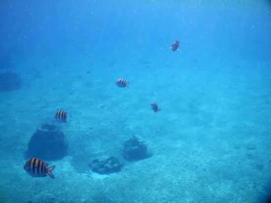Pantera Jeep Tours: Man-made fish houses