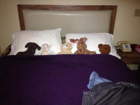 Jack Huff's: This is how the maid service arranged my daughter's stuffed animals under her blankie. So cute!!