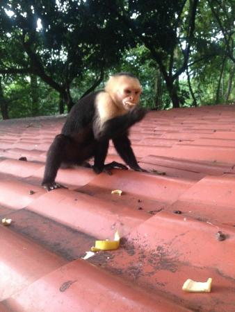 Mango Moon Villa : One of our daily visitors.