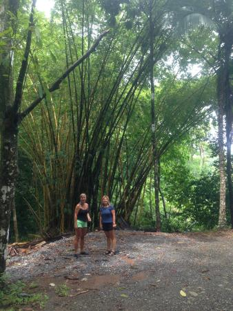 Mango Moon Villa: Bamboo trees providing shade along a walk to the beach.