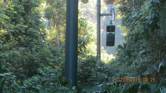 Rainforest Adventures : Mieux que le métro!