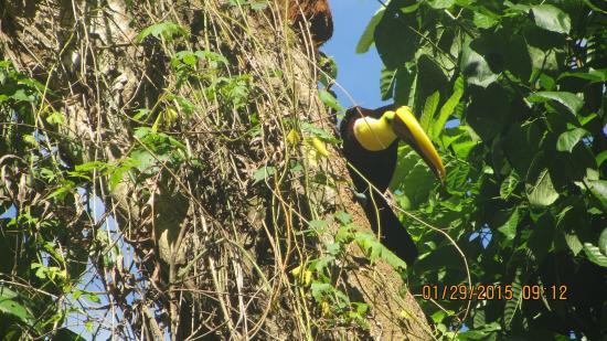 Rainforest Adventures : Mr. Froot loop