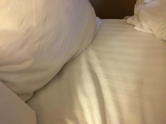"Hotel Metro: Hair in ""Clean"" bed"