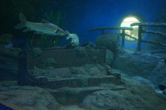 Picture of Underwater World Pattaya, Bang Lamung - TripAdvisor
