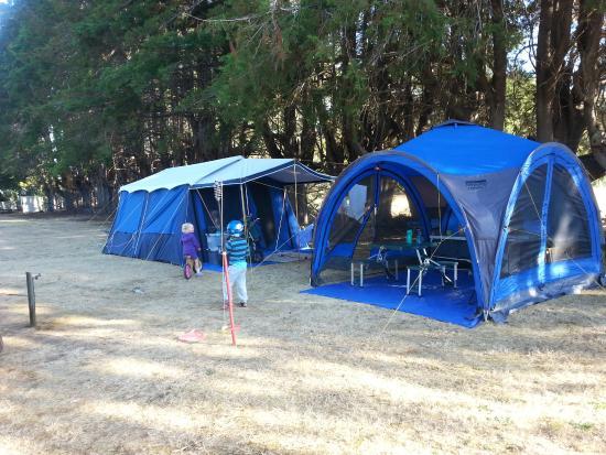 All Seasons Holiday Park Rotorua : Great trees provide shade in the unpowered area