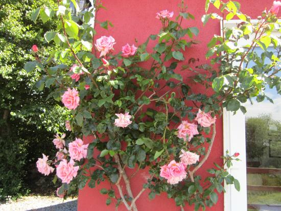 Railway Lodge Country House: Roses in bloom