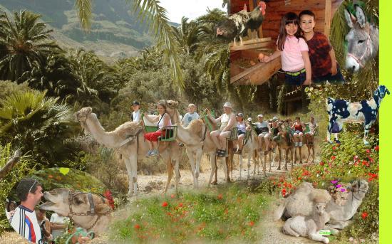Camel Safari Park La Baranda