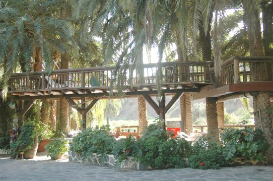 Fataga, Spanien: wwwcamelsafarigrancanaria.com