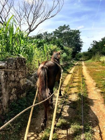 Hotel Marionetas: Horse track en route to another cenote (1 hour outside Merida)