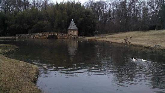 Graylyn Estate: We took a walk and found this pond