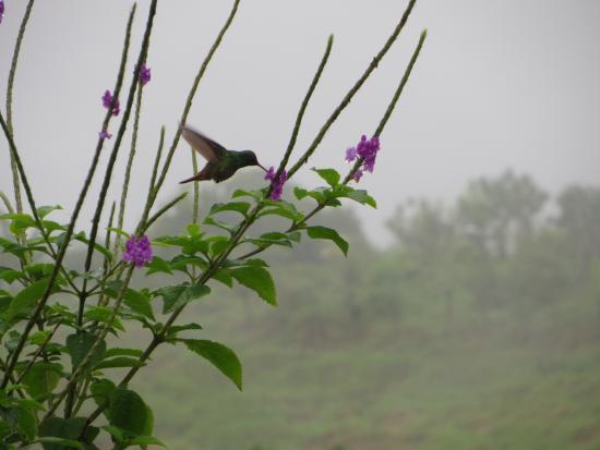 Nepenthe B&B: Kolibri