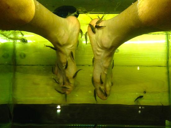 Happy fish picture of athens fish spa massage hammam for Fish pedicure los angeles