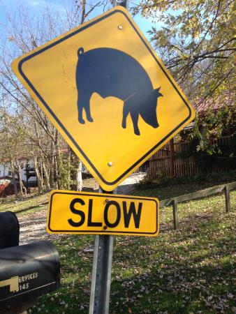 Rabbit Hash General Store: road sign~did not see any pigs