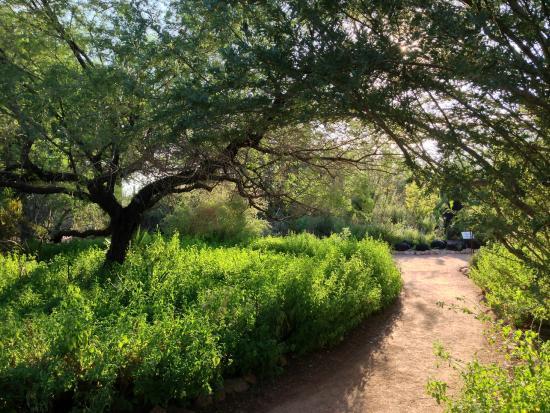 Glass Cactus Picture Of Desert Botanical Garden Phoenix Tripadvisor