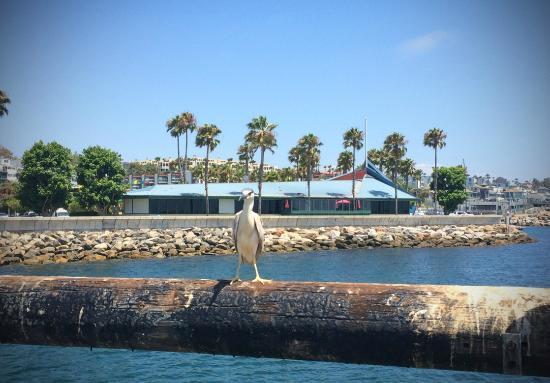 Samba Brazilian Steakhouse Bar Redondo Beach Ocean Front