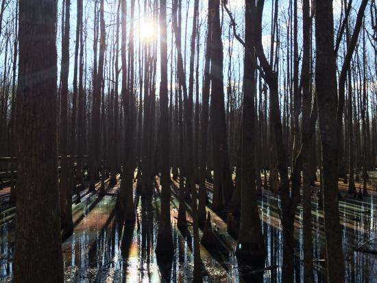 Louisiana Purchase State Park: So glad I decided to take a few extra minutes to see this place.