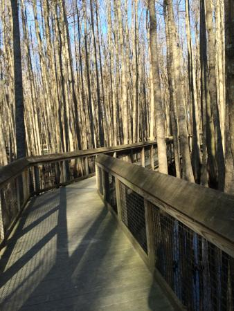 Louisiana Purchase State Park: It looks a little different during February but there are lots of wildlife out to see and zero b