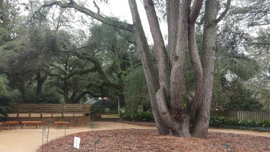 Trees Picture Of Hopelands Gardens Aiken Tripadvisor
