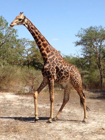 Arch Tours: On the Safari tour (unmissable)