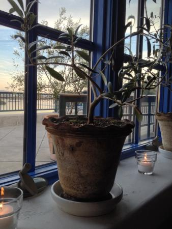 Angèle Restaurant and Bar: Lovely window with miniature olive trees.
