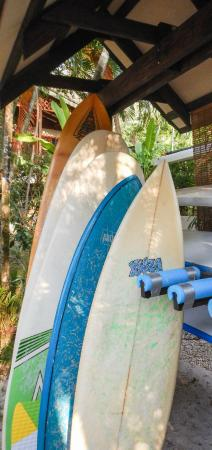 Hotel Oasis: Surfing anyone??