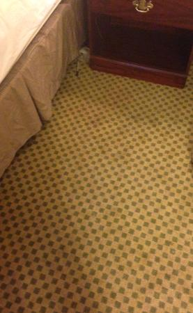 Wingate by Wyndham Alpharetta: Stained carpet