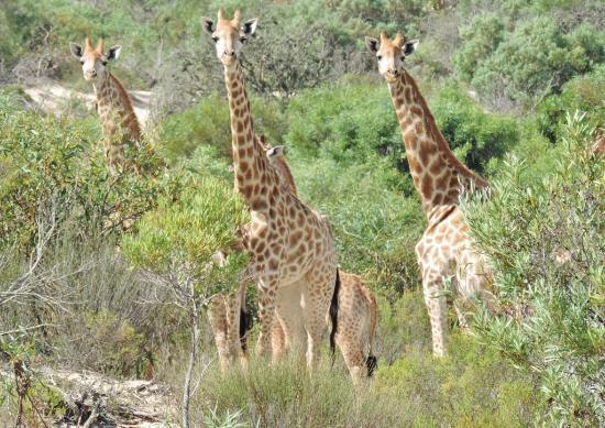 Buffelsfontein: Watching me watching you