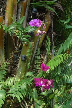 Baan Sukreep - Zen Garden Cottages: jardin tropical