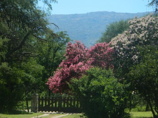 Casa Coqui en Hacienda la Borinquena: parque