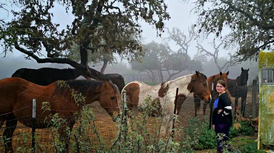 The Sugar & Spice Ranch: Lovely paddock and friendly horses