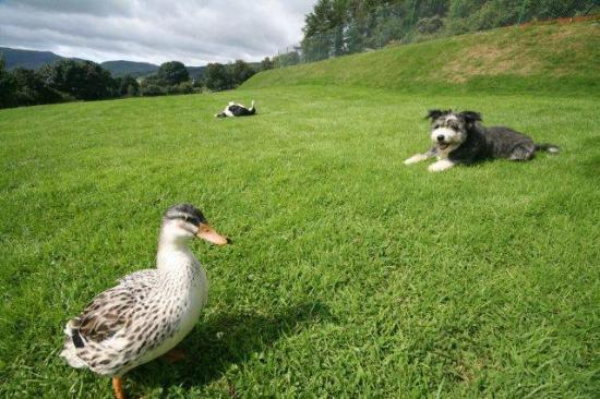 Oakbank Farm : Animal friendly