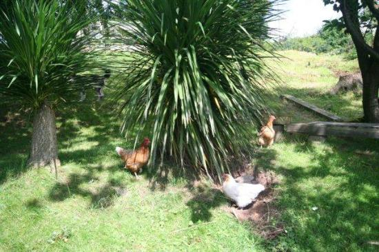Oakbank Farm : Free range poultry
