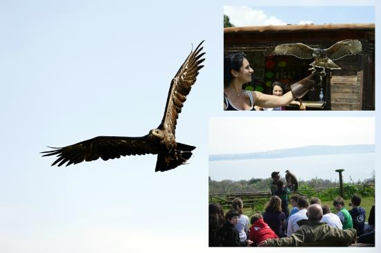 I Falchi di Rocca Romana - Centre of Birds of Prey