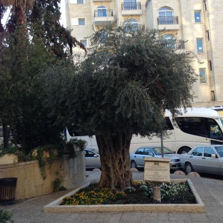 Olive Tree Hotel: Hotel Grounds