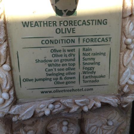 Olive Tree Hotel: Weather Forecasting Olive