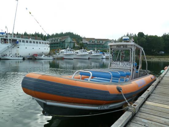 Subtidal Adventures: Zodiac