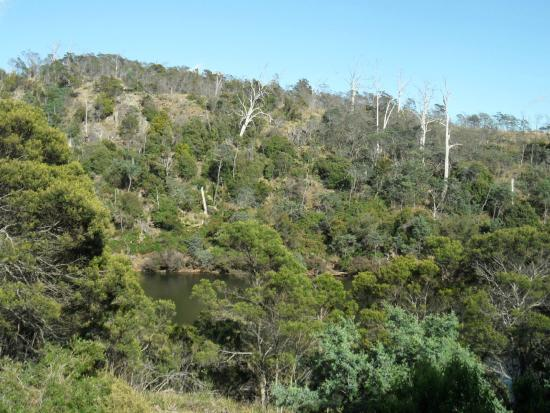 Launceston Bed and Breakfast Retreat: View from balcony across the river valley