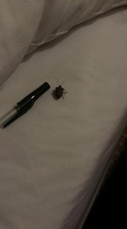 Country Inn & Suites By Carlson, Portland Airport: Bug on my Bed by my pillow