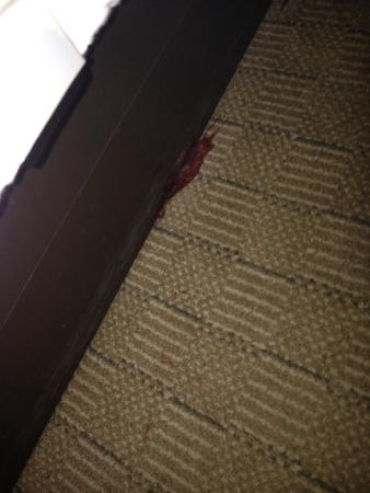 Holiday Inn Hotel & Suites Lake City: Very gross dried red / brown stain on carpet and side of bed